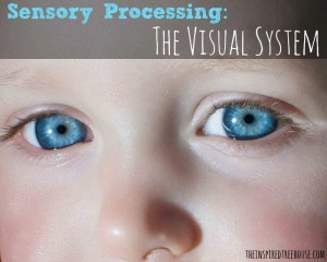 Sensory Processing Visual System