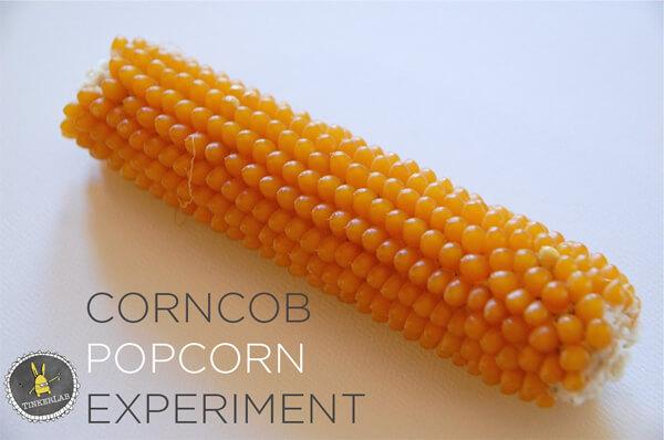 Corncob-Popcorn-Experiment1
