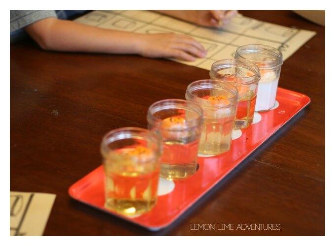 Conducting Peep Science Experiment