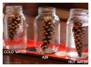 Pine Cone Science Experiment for Kids | Why Do Pinecones Open?