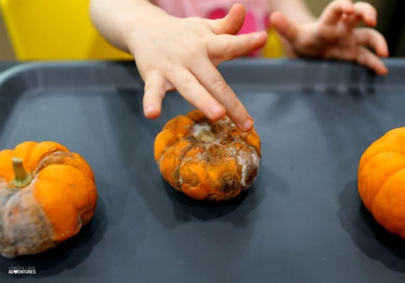 Exploring Rotting Pumpkins