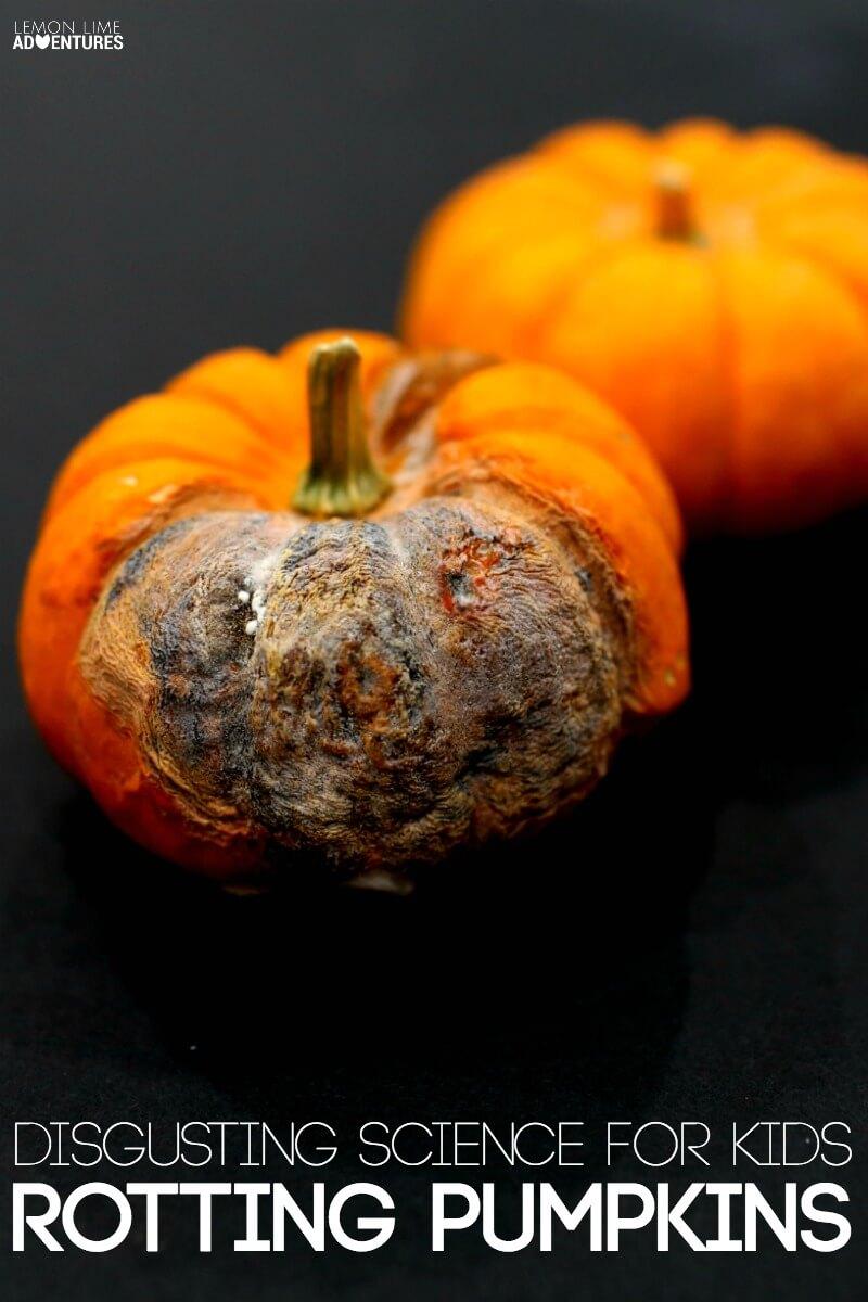 Rotting Pumpkin Science for Kids