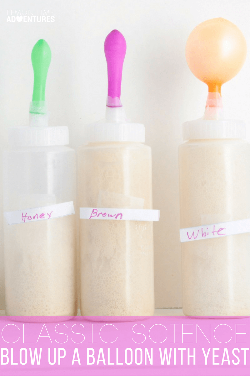 Blow Up a Balloon in this Classic Yeast Science Experiment