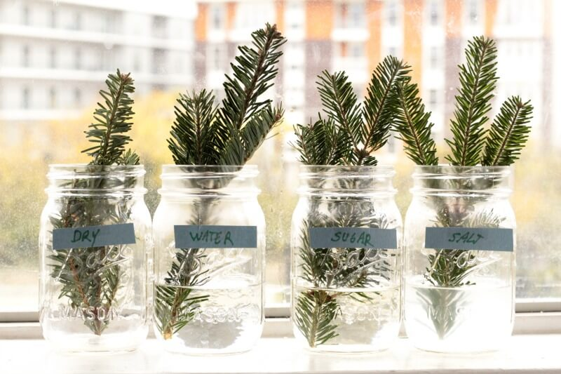 Fun and Fascinating Pine Branch Hardiness STEM Experiment