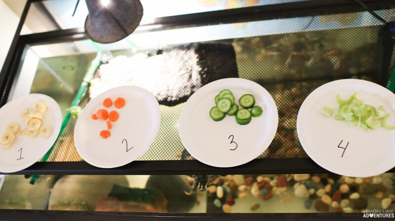 """Simple Science Experiment for Kids   """"What Does My Pet Like to Eat"""""""