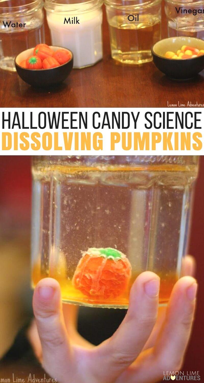 Dissolving Candy Pumpkins Super Fun Halloween Science