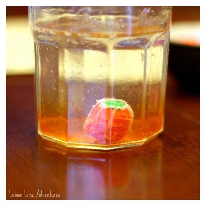 Dissolving Halloween Pumpkin Candy Experiment