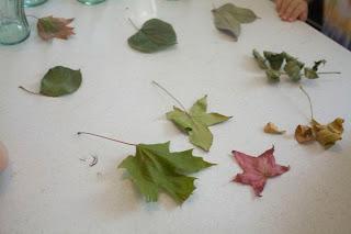 leaf Chromotagraphy