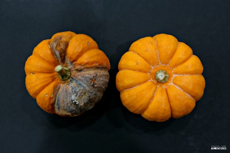 Observing Rotting Pumpkins