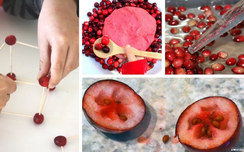 10 Must-Try Cranberry Science Experiments