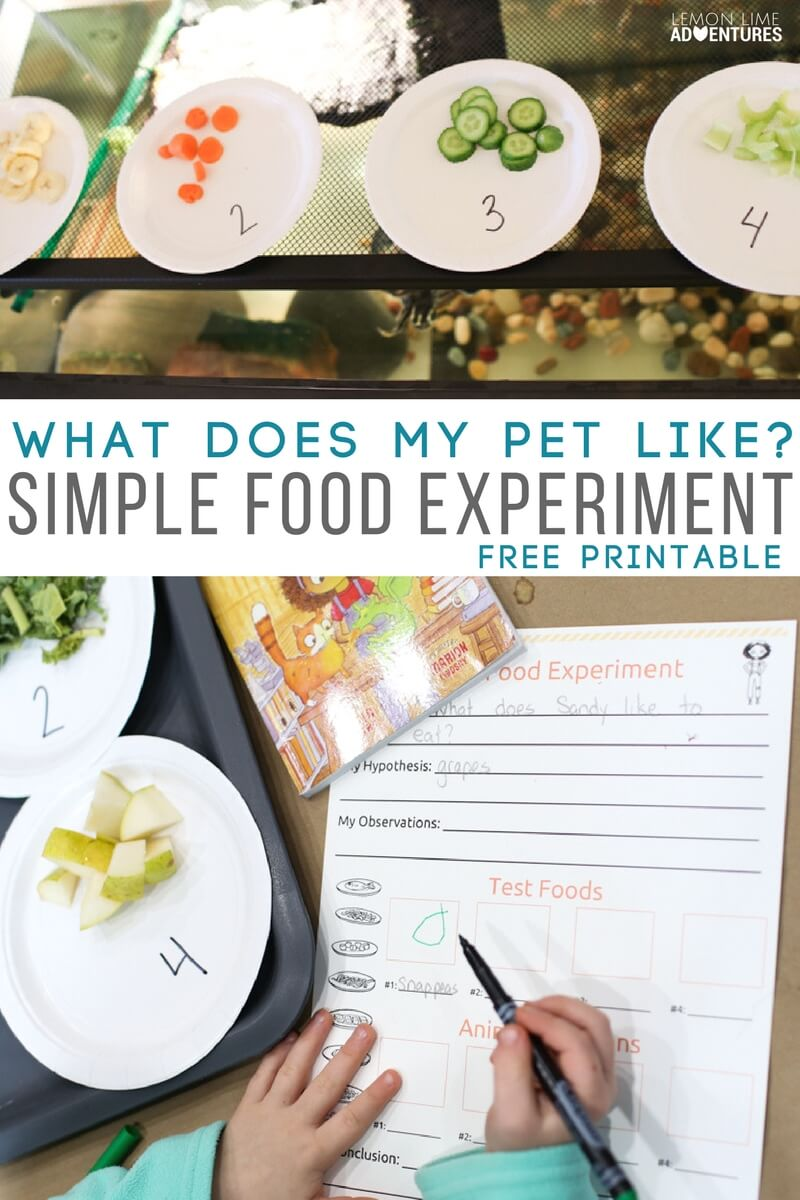 SimpleScience Experiment for Kids with Pets (Perfect for Science Fair)