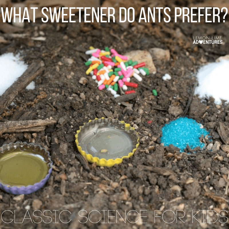 Classic Science Experiment: What Sweetener Do Ants Prefer?
